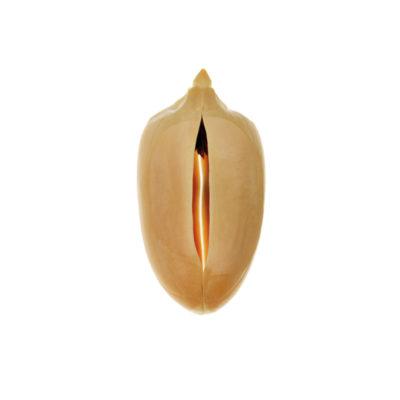 Seed II